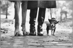 elliott-erwitt-nyc-1974-dog-legs