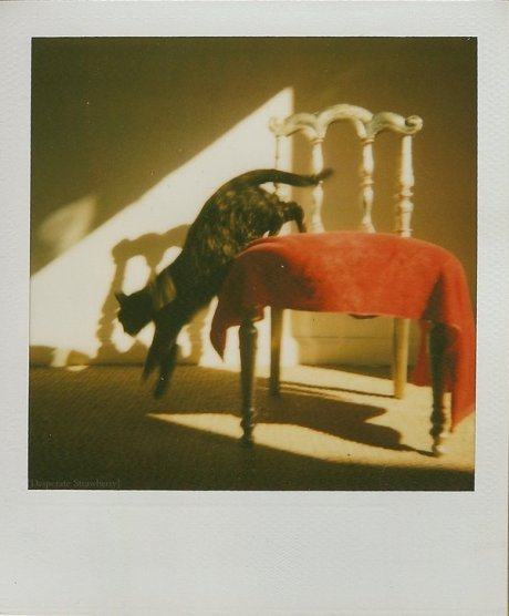 Gaia_polaroid__by_desperate_strawberry