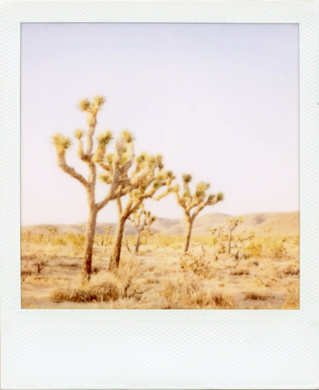 Joshua_Trees_Polaroid_by_fishtankbabe